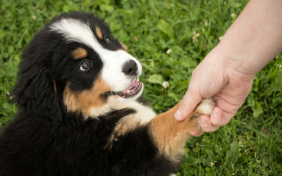 Person holding a puppy's paw